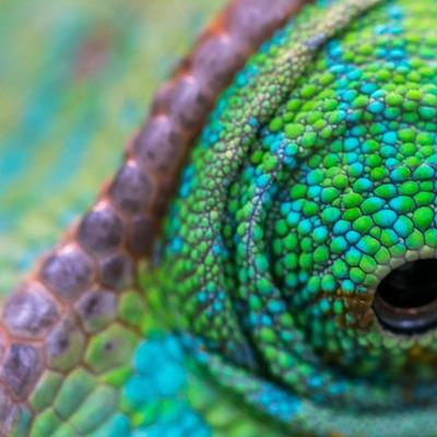 chameleonscales@mamot.fr