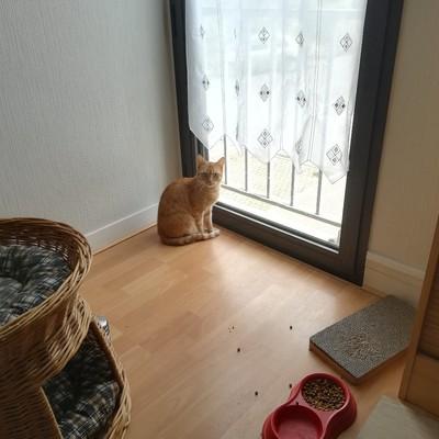 meowcarotte@mamot.fr